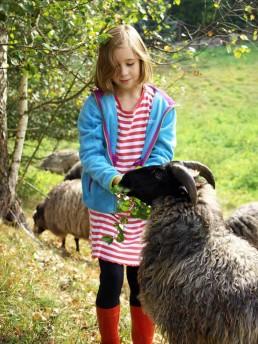 owce wrzosówki Siedlisko na Wygonie