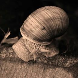 ślimak zwierzaki Siedlisko na Wygonie