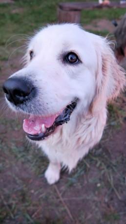 pies zwierzaki Siedlisko na Wygonie