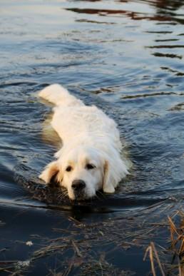 Sonia pies zwierzaki Siedlisko na Wygonie