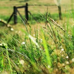 na łące | Agroturystyka na Mazurach Siedlisko na Wygonie